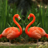 flamingo-love-talk-3161290